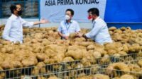 Porang Potential as Future Healthy Food: President Jokowi