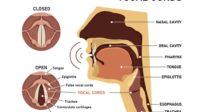 Kenali Gejala dan Penyebab Kelumpuhan pada Pita Suara