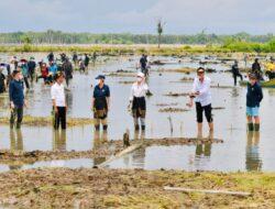 Presiden Jokowi Tanam Mangrove Bersama Dubes dan Masyarakat di Tana Tidung